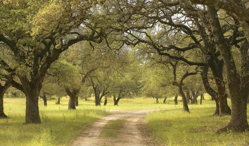 bel-trees
